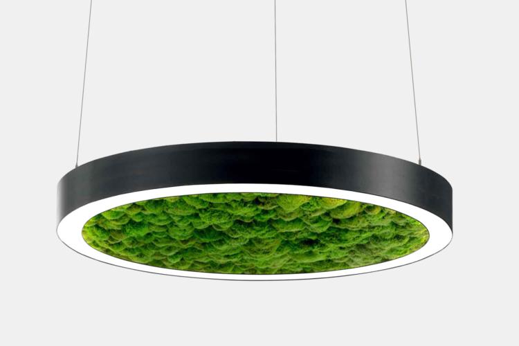 Серия Moss. Кольцевые светодиодные светильники со стабилизированным мхом купить во Владимире